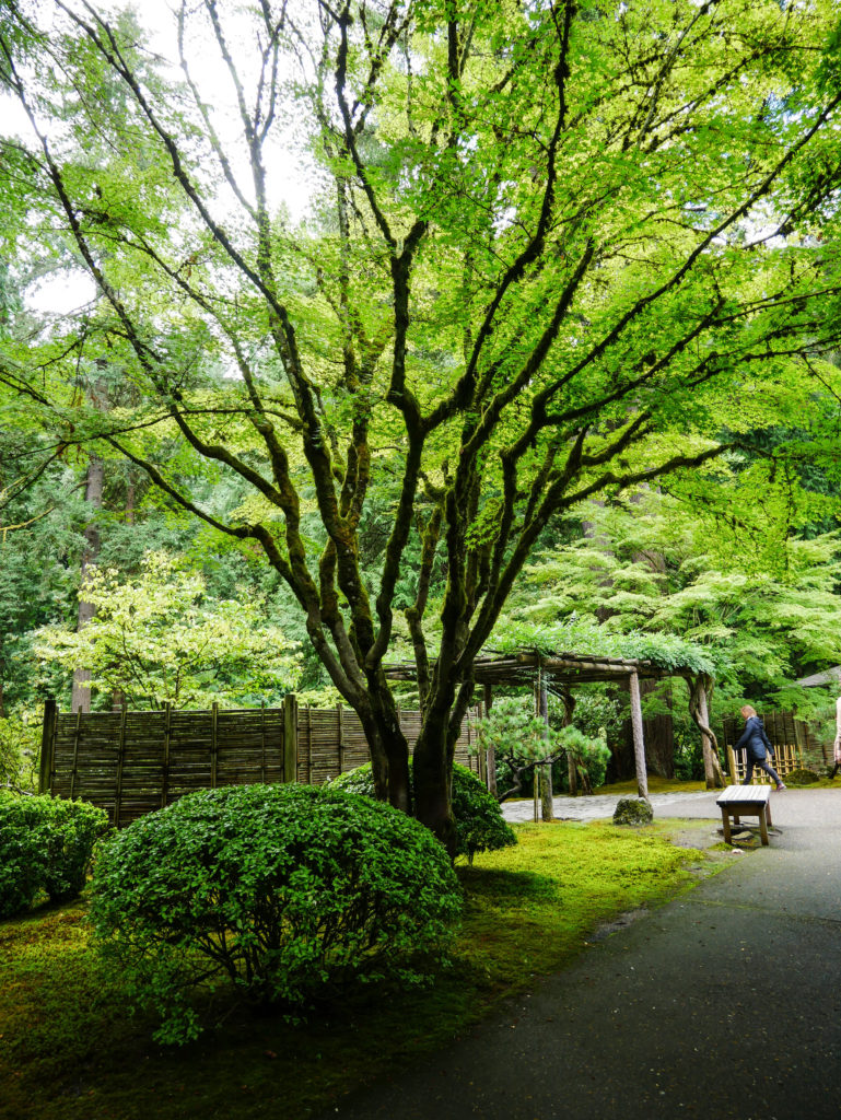 tree and greenery in the Portland Japanese Garden