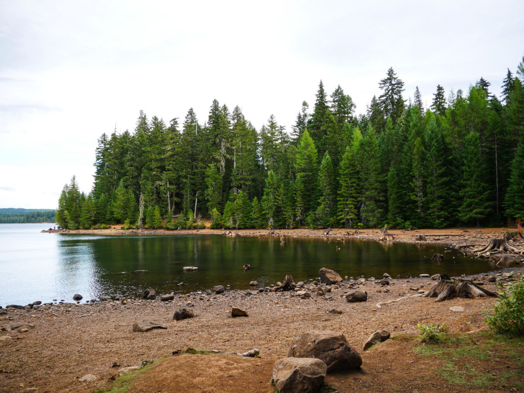 trees and forest at Timothy Lake Portland Oregon